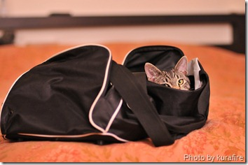 Cat in gym bag